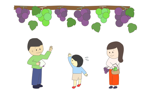 Grape picking parent and child_male_female_child