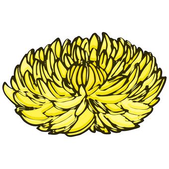 Food chrysanthemum / chrysanthemum