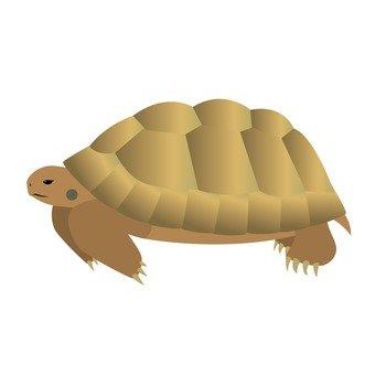 Turtle 13