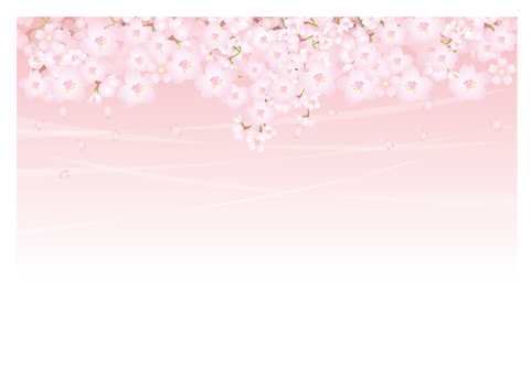 Background of spring breeze and cherry blossoms