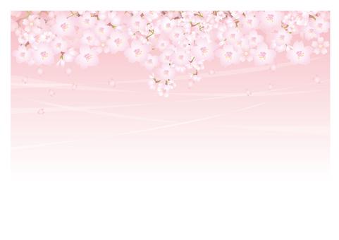 春天的微風和櫻花的背景