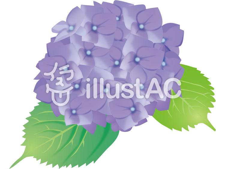あじさい(紫)のイラスト