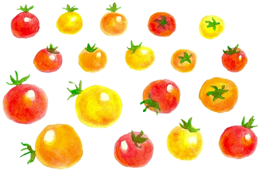 Watercolor Petit tomato