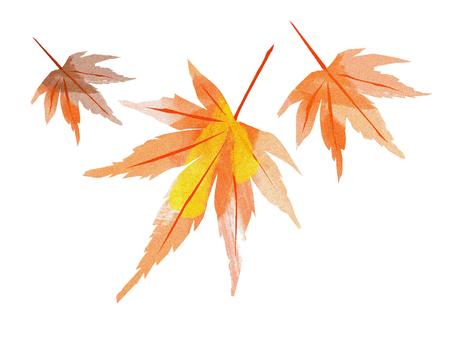 Autumn leaves maple leaves