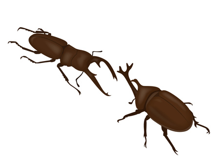 Insects Sumo