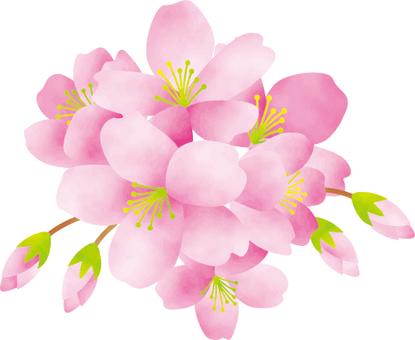 벚꽃 수채화 화풍