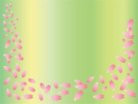 Cherry blossoming petal dancing