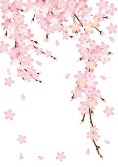 Cherry blossom petals and branches A4 size
