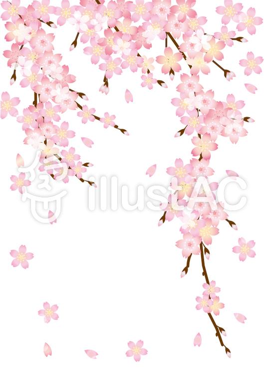 桜の花びらと枝a4サイズイラスト No 705678無料イラストなら