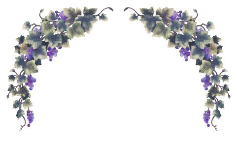 Grape illustration frame 01-2 (no line)