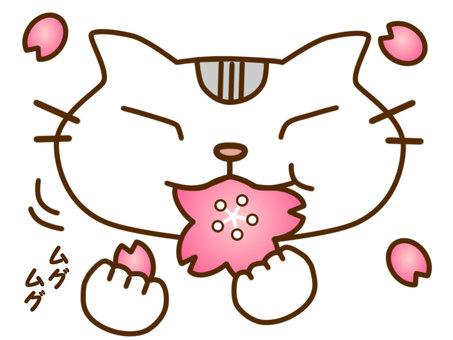 벚꽃과 사탕 쇼