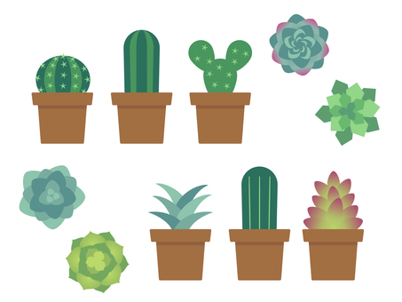 Succulent plant potted illustrations and icons set