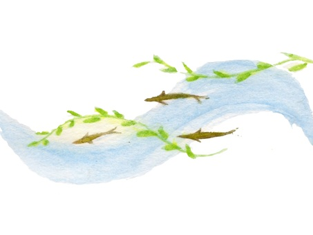 Clear stream fish