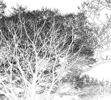 Forest (line drawing)