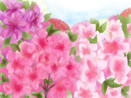 Azalea Flower Field