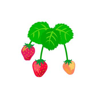 Strawberry fruit and leaves