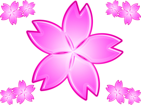 손본 벚꽃의 꽃잎