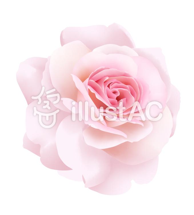 お花・ピンクの薔薇1