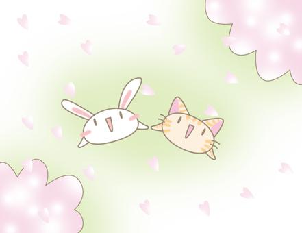 벚꽃 피다