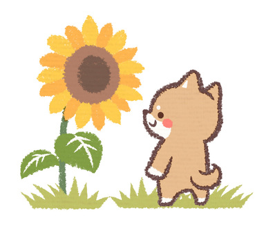 Sunflower and dog