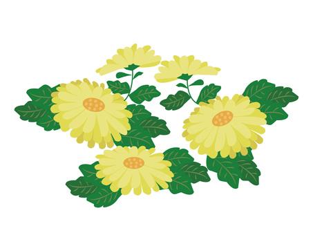 菊花设计插图