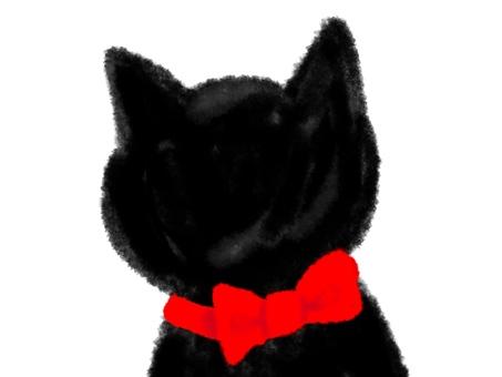 Black cat, back view