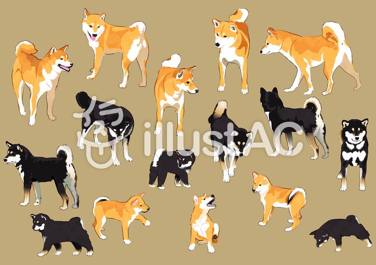 柴犬一覧のイラスト