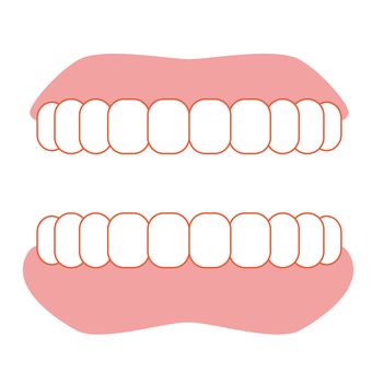 Tooth and denture illustration icon material