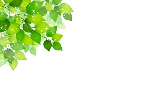 Fresh green material 206