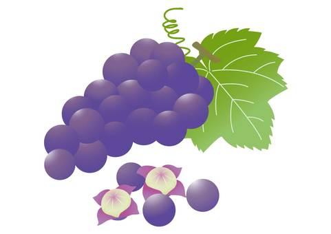 Kyoho or grape