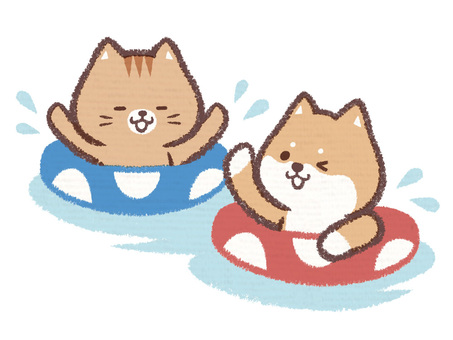 Dog cat water play