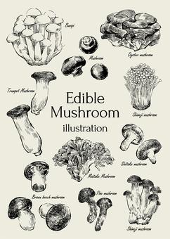 Illustration of edible mushrooms