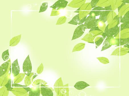 新緑 01