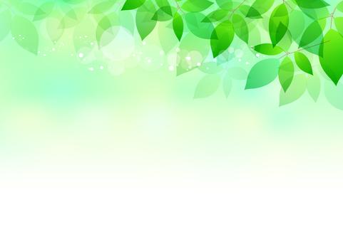 Fresh green material 181