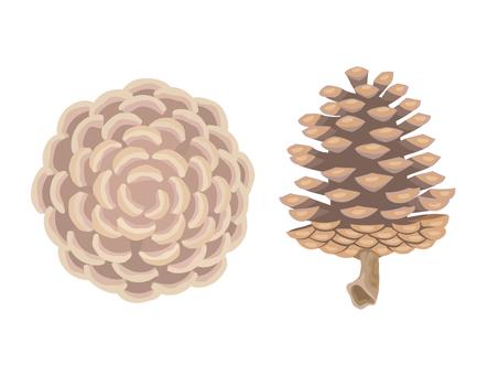 Pine cones (Matsubokkuri)