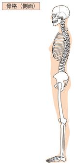 Whole body skeleton (side)