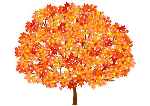 Fall image material 26