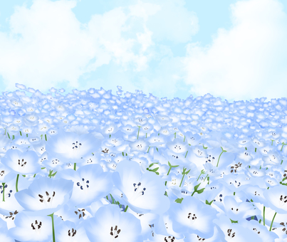 Nemophila and blue sky