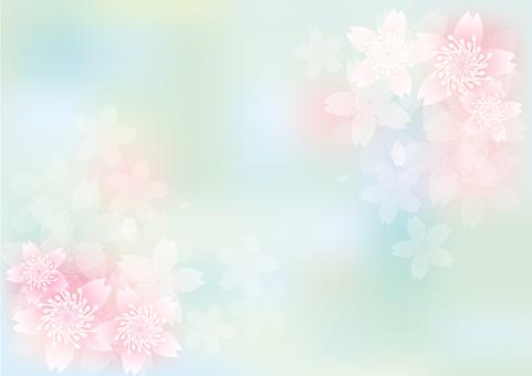 Blooming 243