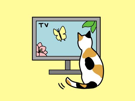 貓對電視有反應