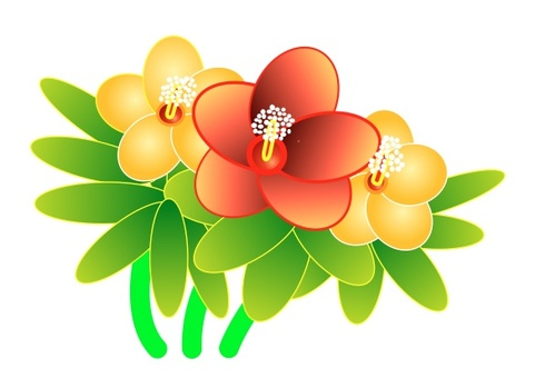 Flowering of a flower