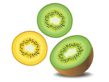 Fruit _ Kiwi 01