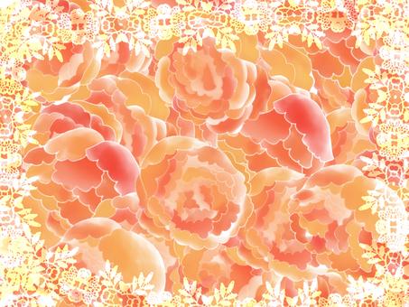Rose of Orange