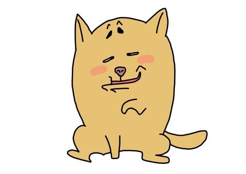 개 이상한 얼굴