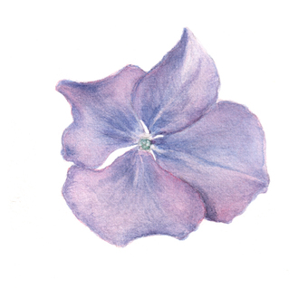 꽃 15- 블루 수국