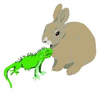 Rabbit and Chameleon