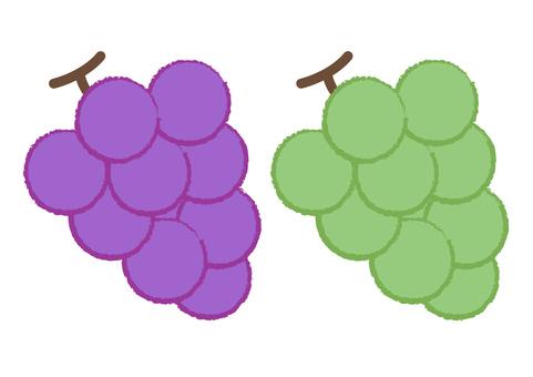 grape_ grapes 3