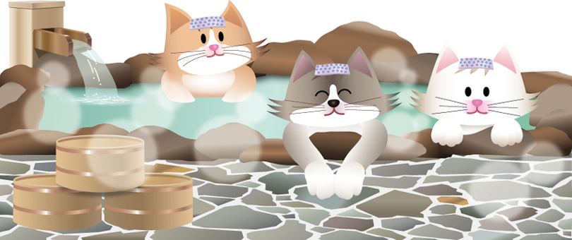 Cats and hot springs