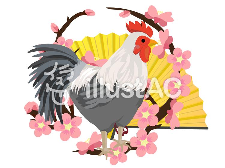酉年 梅の輪と鶏のイラスト