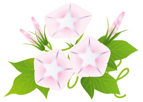 Pink Asakao 4
